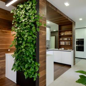 Изготовление стен из живых растений